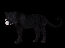 leopard-1984125_1920-1-300x225